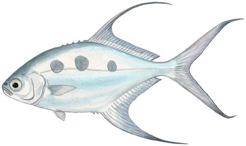 Onshore Flyfishing Guide to Saltwater